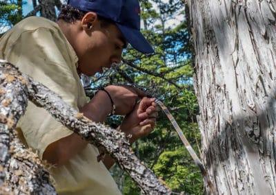 AK Tree Measure